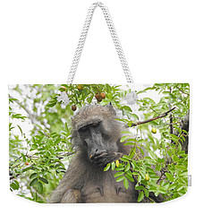 Chacma Baboon Weekender Tote Bag by Betty-Anne McDonald