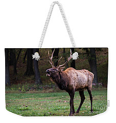 Weekender Tote Bag featuring the photograph Challenger by Andrea Silies