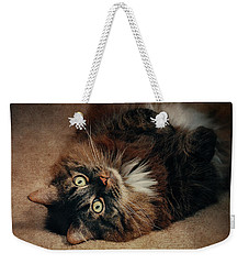 Champagne - My Lazy Main Coon Cat Weekender Tote Bag