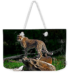 Cheetah Cub Finds Her Pride Rock Weekender Tote Bag by Miroslava Jurcik
