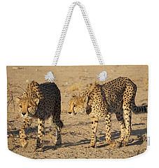 Cheetahs Weekender Tote Bag