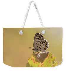 Chequered Blue Butterfly - Scolitantides Orion Weekender Tote Bag by Jivko Nakev