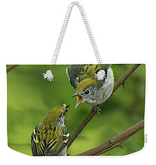 Chestnut-sided Warbler Being Fed Weekender Tote Bag by Alan Lenk