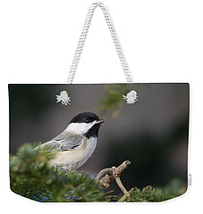 Weekender Tote Bag featuring the photograph Chickadee In Balsam Tree by Susan Capuano
