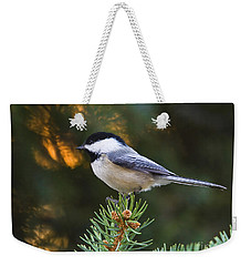 Chickadee In Spruce  Weekender Tote Bag
