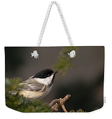 Weekender Tote Bag featuring the photograph Chickadee In The Shadows by Susan Capuano