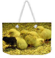 Weekender Tote Bag featuring the photograph Chicks by Laurel Best