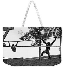 Weekender Tote Bag featuring the photograph Chimps In Black And White by Miroslava Jurcik