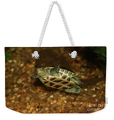 Chinese Golden Thread Turtle  Weekender Tote Bag