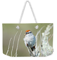 Weekender Tote Bag featuring the photograph Chipping Sparrow by Mike Dawson