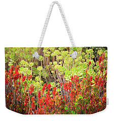 Weekender Tote Bag featuring the photograph Christmas Cactii by David Chandler