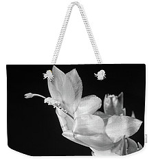 Weekender Tote Bag featuring the photograph Christmas Cactus On Black by Ed Cilley