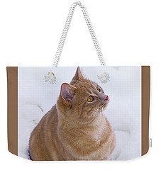 Weekender Tote Bag featuring the photograph Christmas Cat by Jacqi Elmslie