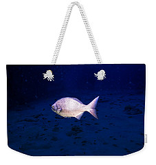 Weekender Tote Bag featuring the photograph Chub by Perla Copernik