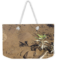 Weekender Tote Bag featuring the photograph Circle Shadow Plant by Marie Neder
