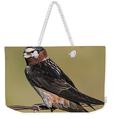 Weekender Tote Bag featuring the photograph Cliff Swallow by Gary Lengyel