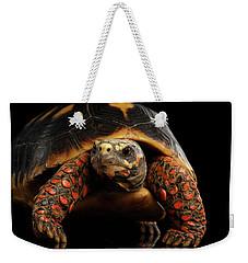 Close-up Of Red-footed Tortoises, Chelonoidis Carbonaria, Isolated Black Background Weekender Tote Bag
