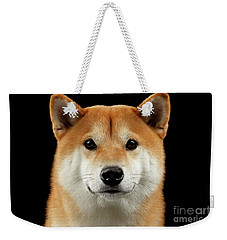 Close-up Portrait Of Head Shiba Inu Dog, Isolated Black Background Weekender Tote Bag by Sergey Taran