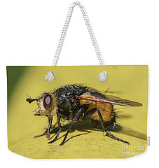 Close Up - Tachinid Fly - Nowickia Ferox Weekender Tote Bag by Jivko Nakev