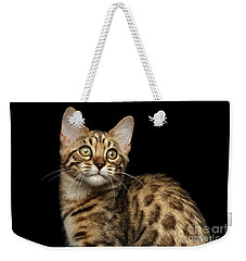 Closeup Bengal Kitty On Isolated Black Background Weekender Tote Bag by Sergey Taran