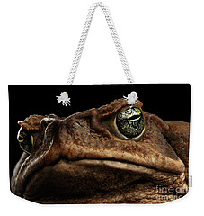 Closeup Cane Toad - Bufo Marinus, Giant Neotropical Or Marine Toad Isolated On Black Background Weekender Tote Bag