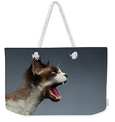 Closeup Devon Rex Hisses In Profile View On Gray  Weekender Tote Bag