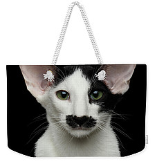 Closeup Funny Oriental Shorthair Looking At Camera Isolated, Bla Weekender Tote Bag by Sergey Taran