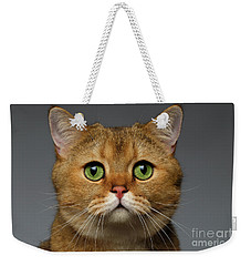 Closeup Golden British Cat With  Green Eyes On Gray Weekender Tote Bag by Sergey Taran