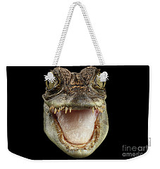 Closeup Head Of Young Cayman Crocodile , Reptile With Opened Mouth Isolated On Black Background, Fro Weekender Tote Bag by Sergey Taran