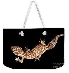 Closeup Leopard Gecko Eublepharis Macularius Isolated On Black Background Weekender Tote Bag
