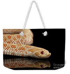 Closeup Pink Pastel Albino Western Hognose Snake, Heterodon Nasicus Isolated On Black Background Weekender Tote Bag