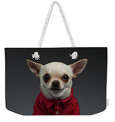 Closeup Portrait Chihuahua Dog In Stylish Clothes. Gray Background Weekender Tote Bag