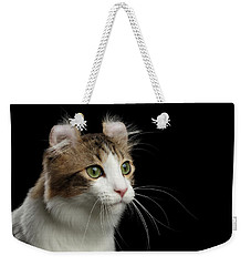 Closeup Portrait Of American Curl Cat On Black Isolated Background Weekender Tote Bag