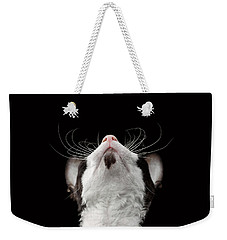 Closeup Portrait Of Cornish Rex Looking Up Isolated On Black  Weekender Tote Bag by Sergey Taran