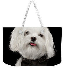 Closeup Portrait Of Happy White Maltese Dog With Bow Looking In Camera Isolated On Black Background Weekender Tote Bag