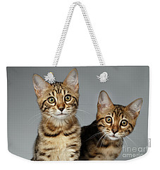 Closeup Portrait Of Two Bengal Kitten On White Background Weekender Tote Bag by Sergey Taran