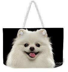 Closeup Portrait Of  White Spitz Dog On Black  Weekender Tote Bag by Sergey Taran