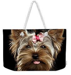 Closeup Portrait Of Yorkshire Terrier Dog On Black Background Weekender Tote Bag