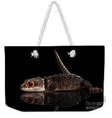 Closeup Red-eyed Crocodile Skink, Tribolonotus Gracilis, Isolated On Black Background Weekender Tote Bag by Sergey Taran