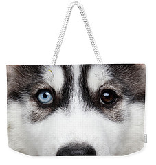 Closeup Siberian Husky Puppy Different Eyes Weekender Tote Bag