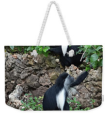 Colobus Monkey Eating Leaves For Breakfast Weekender Tote Bag