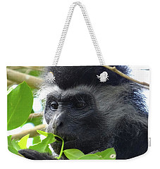Colobus Monkey Eating Leaves In A Tree Close Up Weekender Tote Bag