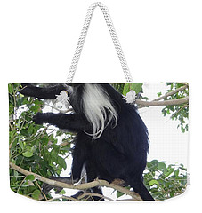 Colobus Monkey Eating Leaves In A Tree Weekender Tote Bag