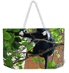 Colobus Monkey Eating Leaves In A Tree - Full Body Weekender Tote Bag