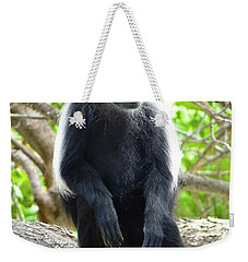 Colobus Monkey Sitting In A Tree 2 Weekender Tote Bag