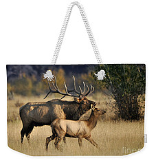 Weekender Tote Bag featuring the photograph Colorado Elk  by Nava Thompson