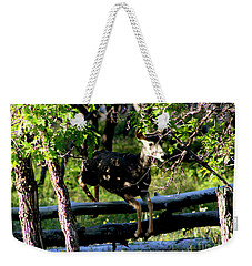 Colorado Mule Deer Jumping A Fense Weekender Tote Bag