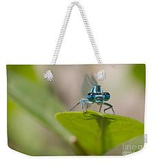 Common Blue Damselfly Weekender Tote Bag