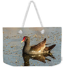 Weekender Tote Bag featuring the photograph Common Gallinule by Robert Frederick