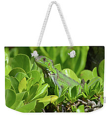 Common Iguana Frolicking In The Shrubbery Weekender Tote Bag by DejaVu Designs